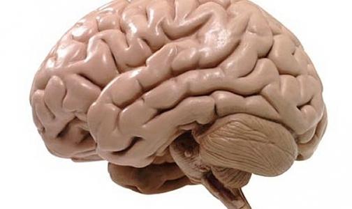 Обнаружен участок в головном мозге человека, в котором таится зло