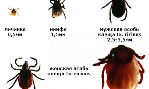 Петербургский биолог рассказал, когда ждать пика активности клещей в этом году