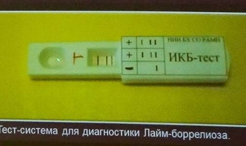 Ученые создали первый в России экспресс-тест на клещевые инфекции