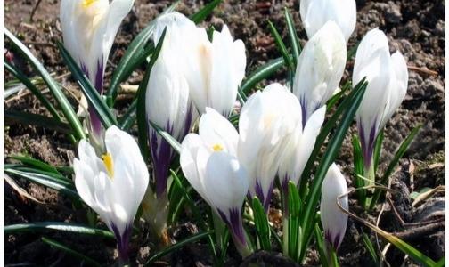 Белый цветок — в подарок всем, кто жертвует деньги на лечение больных детей