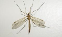 Ученые узнали, что делает людей «вкусными» для комаров