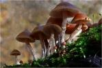 Осторожно: грибной сезон: Фоторепортаж