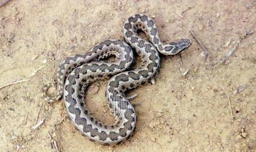 Петербурженка попала в реанимацию после укуса змеи