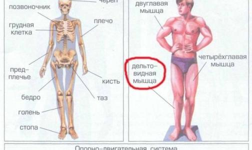 В школьном учебнике «Окружающий мир» нашли грубые анатомические ошибки