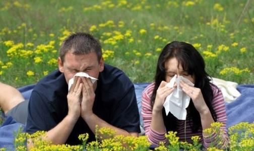 Хеликс поможет найти свой аллерген