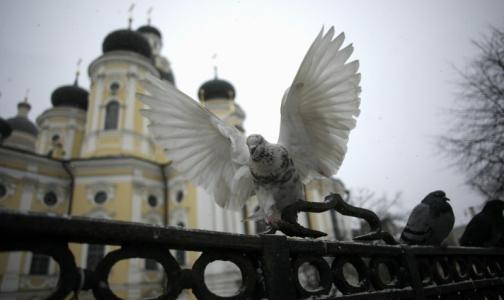Петербуржцев просят не кормить голубей из-за «попугайной болезни»