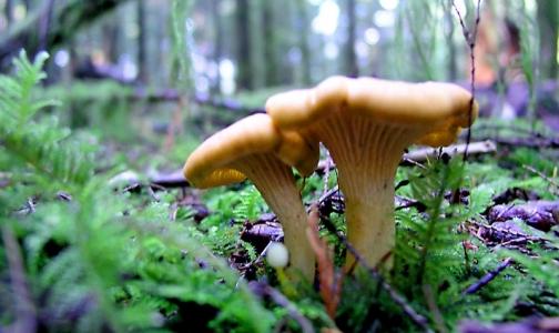Как собрать грибы без угрозы для жизни