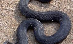 За лето 7 петербуржцев попали в НИИ скорой помощи из-за укусов змей
