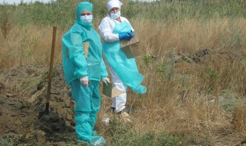 В Ростове два фермера заразились сибирской язвой