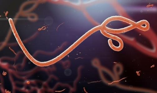 Лихорадка Эбола добралась до Японии?
