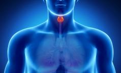 На российском биопринтере впервые напечают щитовидную железу
