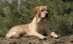 Собаку наградили медалью за обнаружение рака у сотен людей