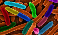 Ученые нашли антибиотик для борьбы с супербактериями