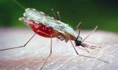 ВОЗ оценивает борьбу с тропическими болезнями в $34 млрд