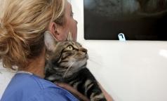 """Ветеринарам разрешат использовать """"человеческие"""" обезболивающие"""