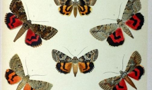 В петербургской детской больнице создается центр помощи детям-бабочкам