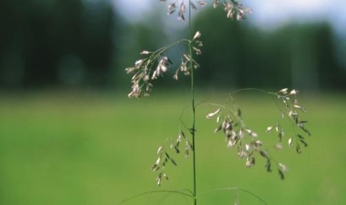 Центр профилактики: Что делать, чтобы воздух, вода и почва не стали причиной болезней