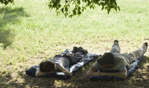 Петербуржцы стали обращаться в больницу из-за клещей в 5 раз чаще