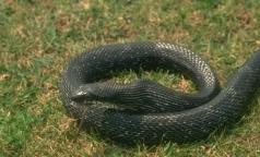 Минздрав рассказал, как помочь пострадавшим от змей