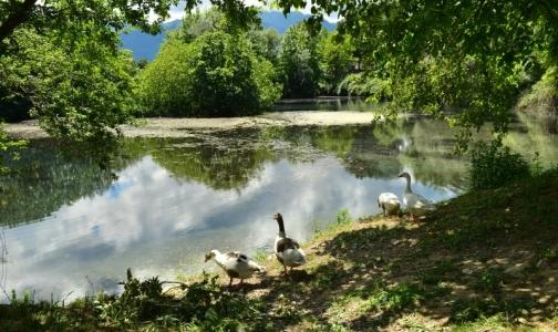Где в Ленобласти можно купаться без вреда для здоровья