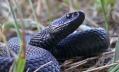 Из-за укусов змей две петербурженки оказались в реанимации