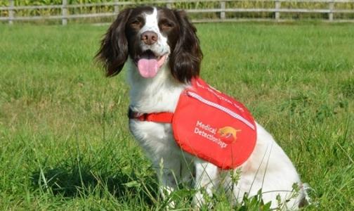 В Британии собаки будут диагностировать у пациентов рак