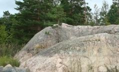 Клещи активизировались в Выборгском районе Ленобласти