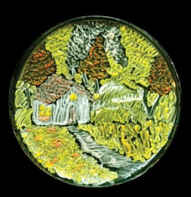 Ученые нарисовали картины, использовав бактерии вместо краски
