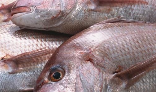 Самым некачественным продуктом в петербургских магазинах оказалась рыба