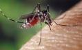 Медики обнаружили, что укус комара может вызвать микроцефалию