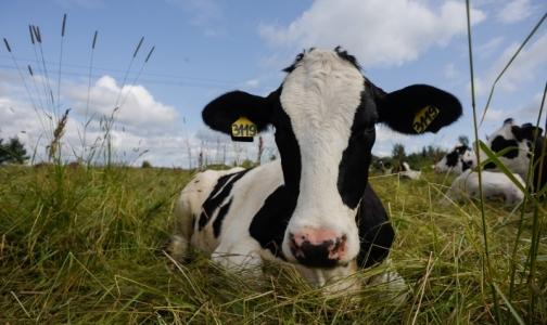 Роспотребнадзор не советует покупать молоко трех петербургских производителей