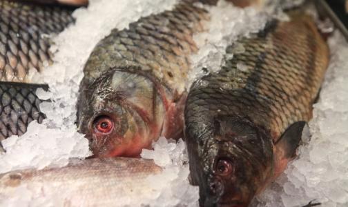 В Петербурге проверили качество замороженной рыбы