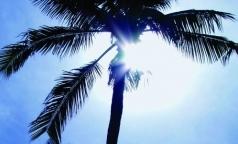 Ученые изучили, насколько вредно для здоровья пальмовое масло