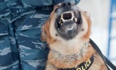 «Собачья проверка» школьников на наркотики противоречила инструкциям Минздрава