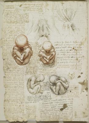 Британская организация Royal Collection Trust оцифровала анатомические рисунки Леонардо да Винчи