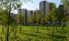 В Петербурге госпитализировали рекордное число пациентов с клещевым энцефалитом