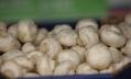 В 2016 году Роспотребнадзор забраковал 200 кг грибов