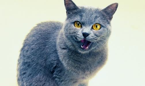 Как в Петербурге ищут лабораторию для исследования мертвого кота с подозрением на бешенство