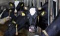 Россельхознадзор недоволен «молочкой» шести белорусских предприятий