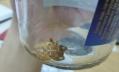 Российские врачи рассказали, что делать при укусе паука