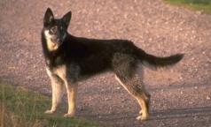В России собак научили выявлять рак на ранней стадии