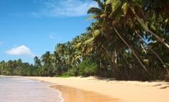 Роспотребнадзор предупреждает россиян об опасности посещения Шри-Ланки