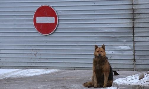Что делать, если вас укусила домашняя или бродячая собака