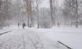 Восемь петербуржцев пострадали от клещей на территории города