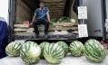 Сколько нитратных арбузов продается в Петербурге и можно ли ими отравиться