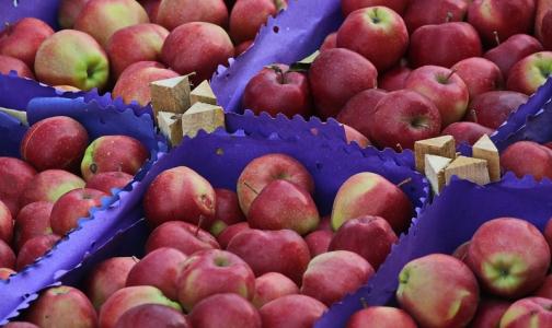 Специалисты рассказали, как выбрать качественные яблоки