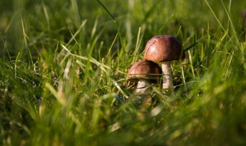 Санитарные врачи рассказали, как правильно собирать и готовить грибы