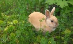 Психотерапия в 31-й больнице — прогулка во дворе с белками и кроликом