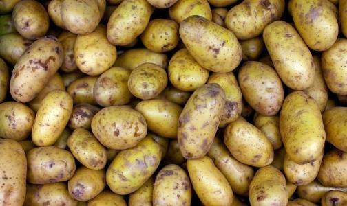 Эксперт рассказал, стоит ли бояться зеленых пятен на картофеле