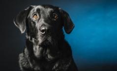 После укуса собственной собаки 11-летний ребенок умер от энцефалита